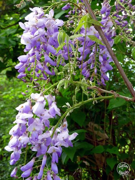 glycine--1600x1200-.jpg