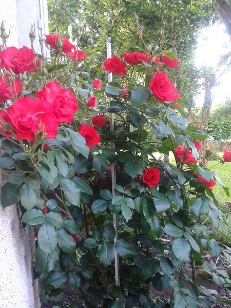 2012-06-17-09.20.02-copie-1.jpg