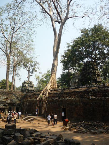 1.Angkor 324 Ta Prohm