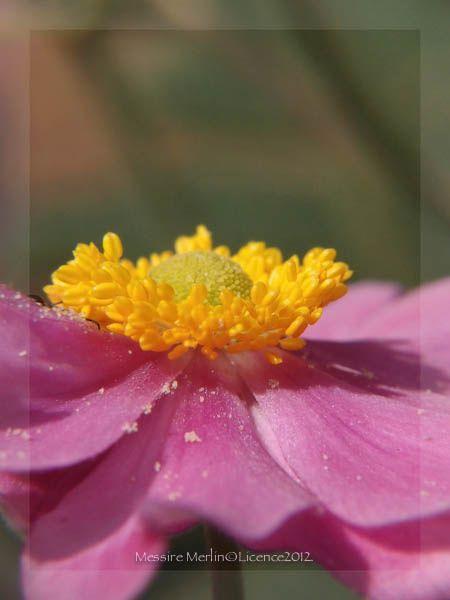 EncadrementCoeur de fleur