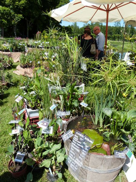 journees-de-la-rose-chaalis---juin-2014---pepiniere-aquat.jpg