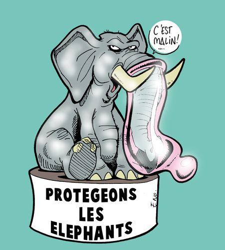 Protégeons les éléphants coul