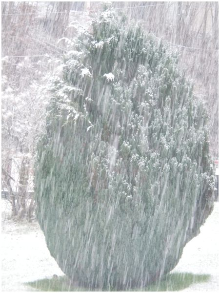 04.12.2012-neige-002.JPG