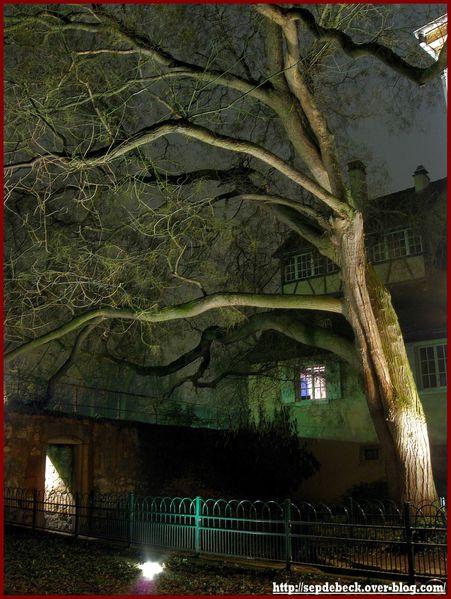 Colmar by night (2)