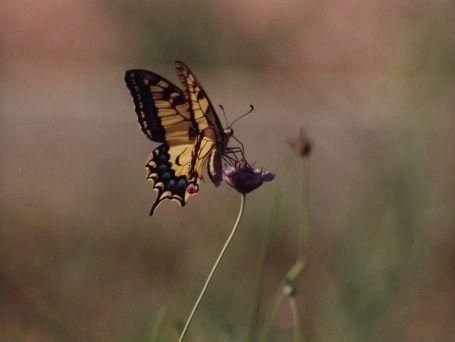 un-papillon---une-fleur.jpg