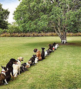 queue-toilettes-chiens-mini.jpg