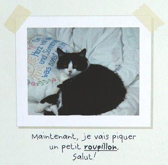Moi--Therese-Miaou-5.JPG