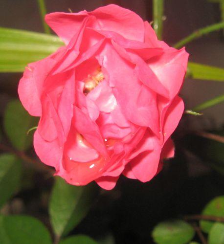 fleurs-a-venir 1012-copie-1