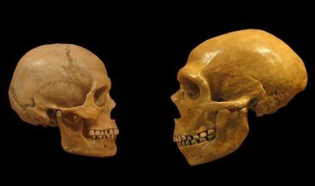 http://img.over-blog.com/460x271/4/23/42/31/100/neandertal-sapiens_0.jpg