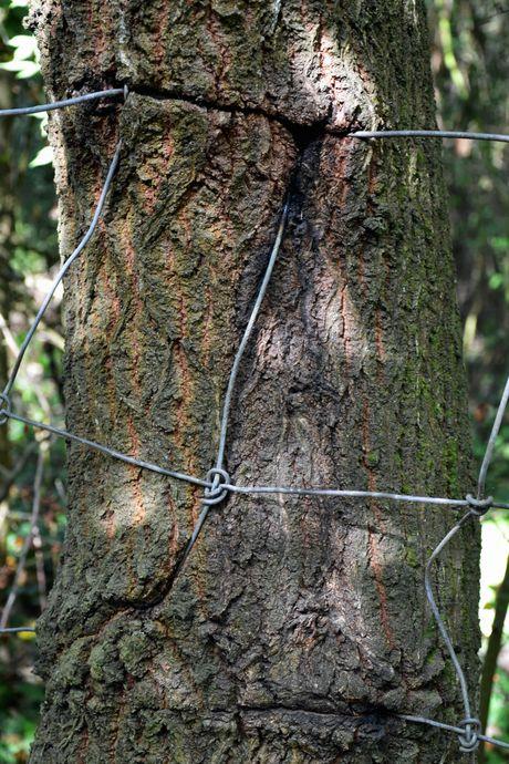 arbre-grillage-copie-1.jpg