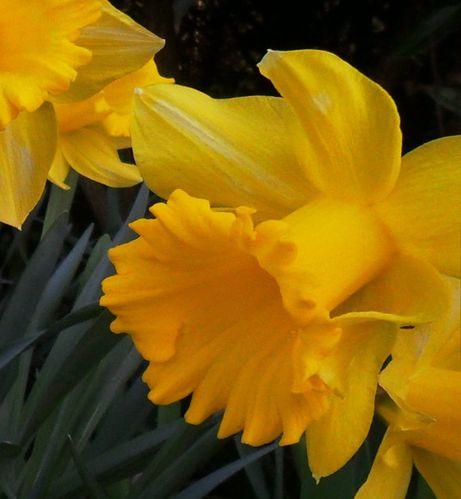 en-jaune-5.jpg