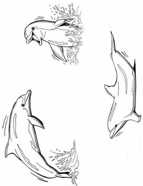 Dauphin sir ne mer gif clipart dessin coloriage blinkies - Coloriage magique de dauphin ...