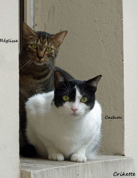Mes-chats-Reglisse---Cachou.jpg