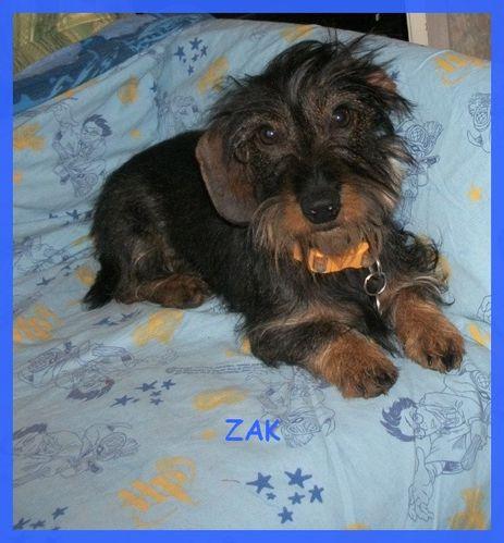 ZAK-BLOG.jpg