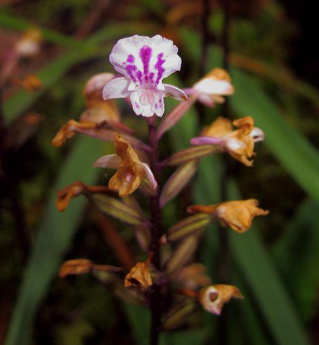 conference-sur-les-orchidees 4370