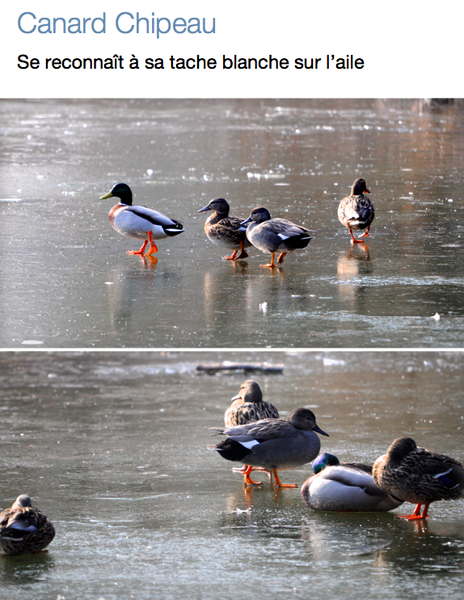 Capture-d-ecran-2013-02-26-a-17.13.45.png
