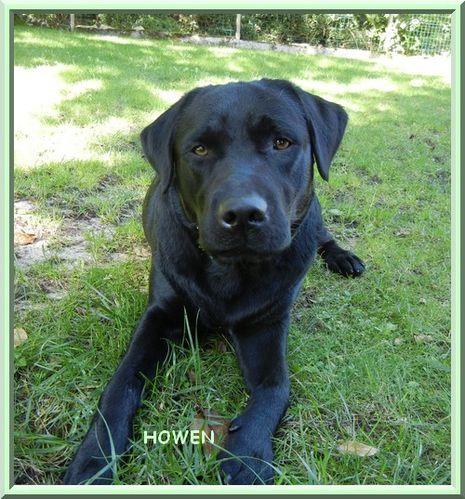 howen-1-an-et-demi-2-.jpg