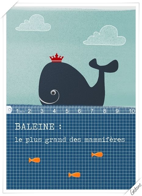 Copie-de-baleine2.jpg