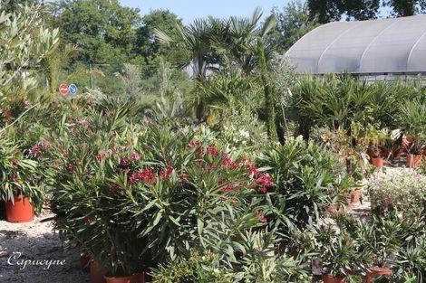 La-halle-aux-plantes 4480