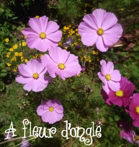 A-fleur-d-ongle-vacances.jpg