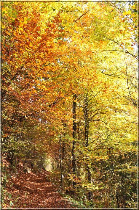 automne 318