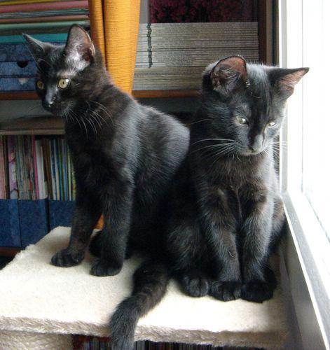 Chatonnes noires018