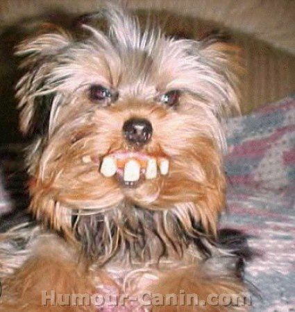 big_8983-chien-dents.jpg