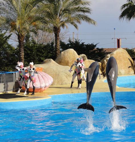 spectacle-dauphins-marineland.jpg
