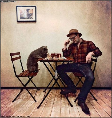 chess-cat.jpg
