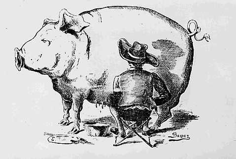 Porc trait par Van Dyck-Bridet