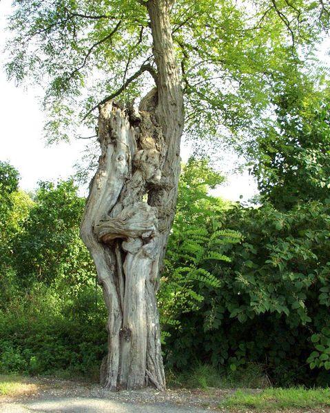 arbres-031.jpg