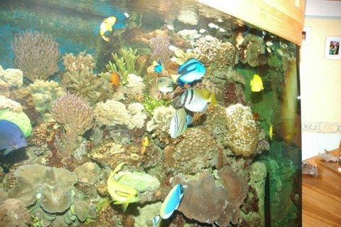 Vends aquarium r cifal complet 2000l le blog monaqua2000 for Aquarium recifal complet