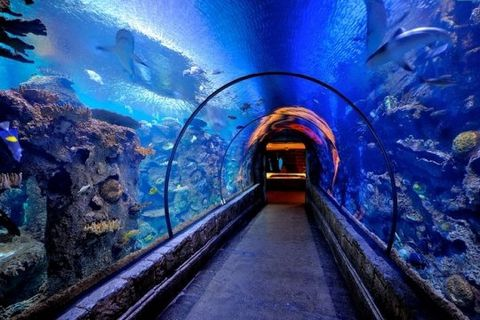 tunnel-aux-requins-515467