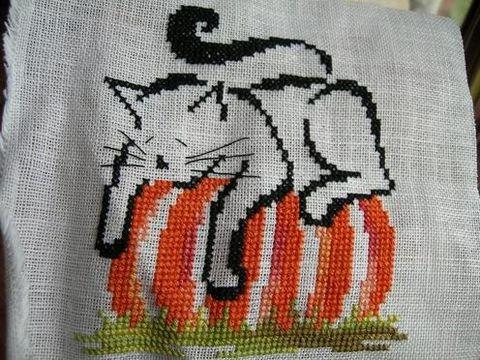 chatbrittercupcitrouille0609081.jpg