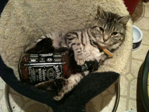 whiskey cat gif