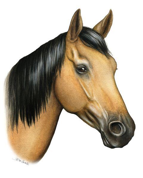 Cheval dessin couleur colorier les enfants - Dessins de chevaux facile ...