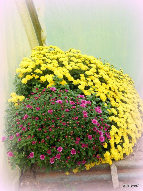 20121025-fleurs-champi-003.JPG
