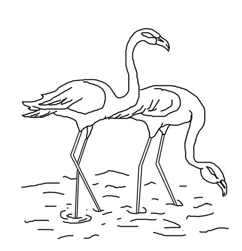 COLORIAGE-FLAMANTS-ROSES.JPG
