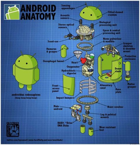 android-anatomie.jpg