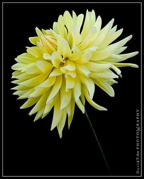 fleurs---fruits---comestibles-7277.jpg