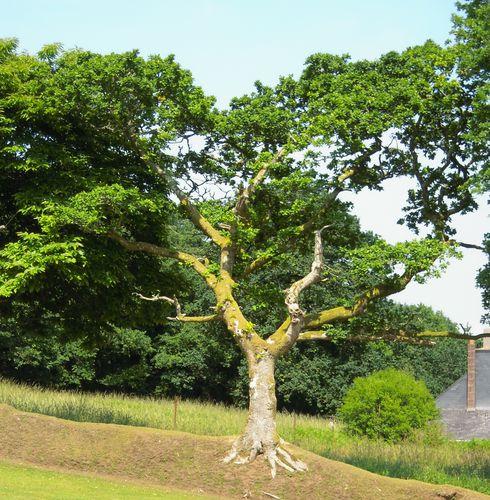 arbre (vie et mort)