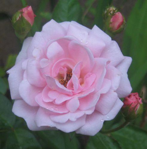 fleurs-de-saison 0505