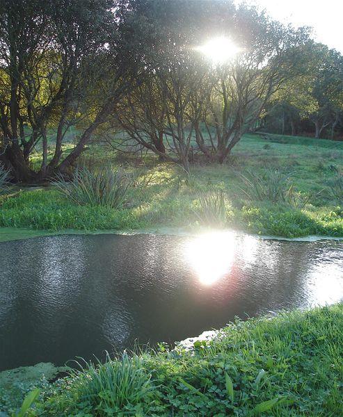 reflet-dans-la-riviere.jpg