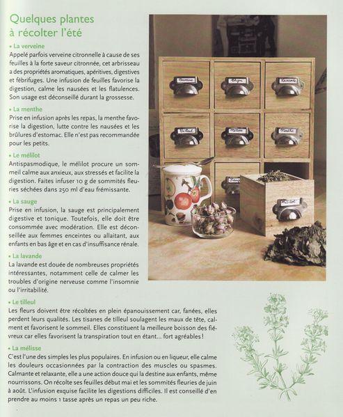 plantes-0003.jpg