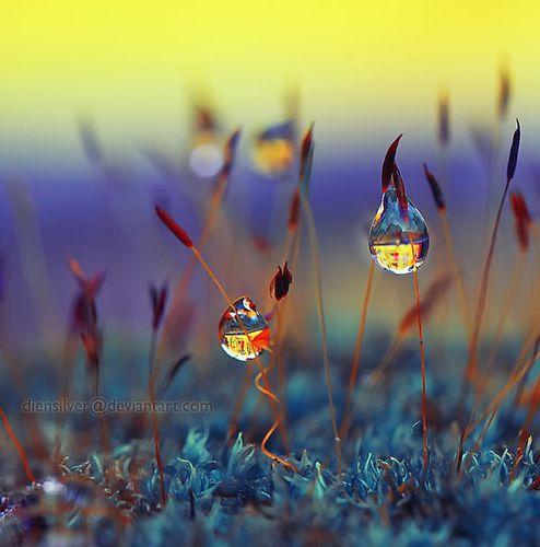 it__s_very_romantic_dews_by_diensilver-d3jawml.jpg