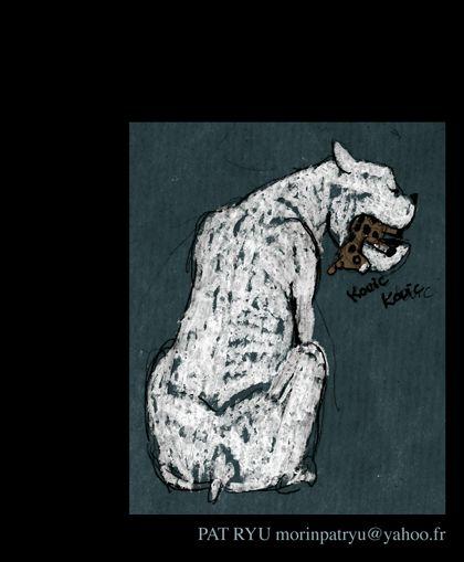 white dog blog