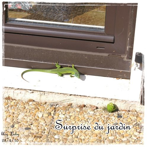 04 28 04 2010 lezard vert (1)