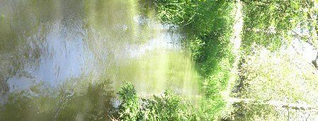Giverny--4--copie-1.JPG