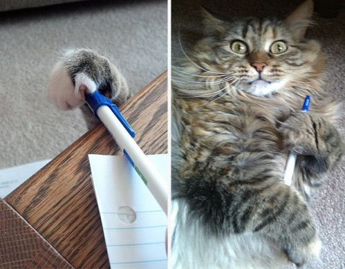 le-chat-voleur-2.jpg