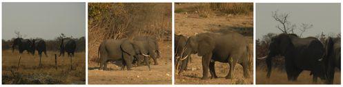 collage elephants